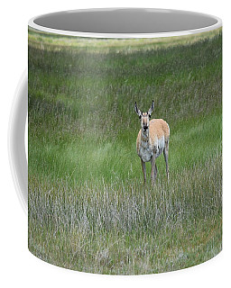 Prong Horned Antelope Lake John Swa Co Coffee Mug