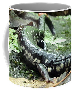 Appalachian Slimy Salamander Coffee Mug