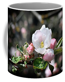 Coffee Mug featuring the photograph Apple Blossom by Nancy Ingersoll