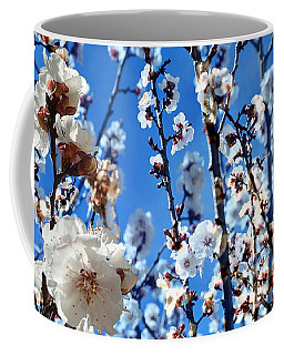 Coffee Mug featuring the photograph Apricot Blossoms by Glenn McCarthy Art and Photography