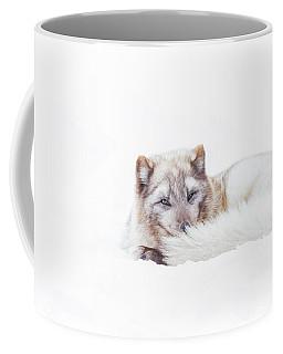 Arctic Stare Coffee Mug