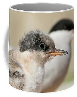 Coffee Mug featuring the photograph Arctic Tern Chick With Parent - Scotland by Karen Van Der Zijden
