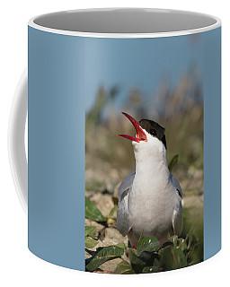 Coffee Mug featuring the photograph Arctic Tern - St John's Pool, Scotland by Karen Van Der Zijden