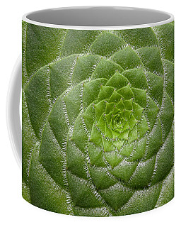 Artistic Nature Green Aeonium Cactus Macro Photo 203 Coffee Mug