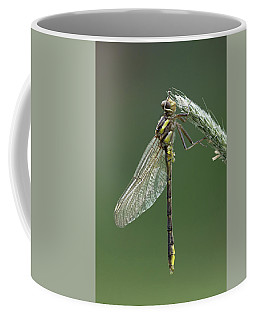 Ashy Or Dusky Clubtail Coffee Mug