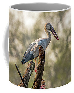 Asian Openbill Coffee Mug by Pravine Chester