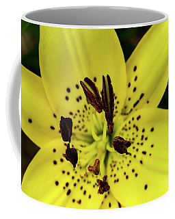 Asiatic Lily Coffee Mug
