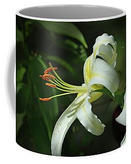Asiatic Lily No 4 Coffee Mug