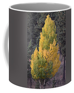 Aspen Tree Fall Colors Co Coffee Mug