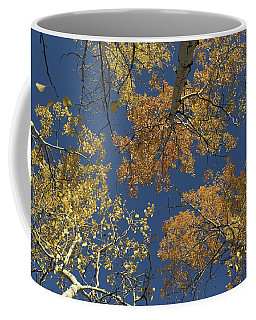 Coffee Mug featuring the photograph Aspens Looking Up by Mary Hone