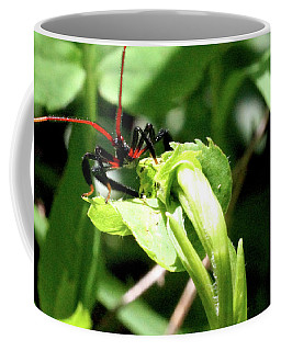 Coffee Mug featuring the photograph Assassin Bug by Meta Gatschenberger