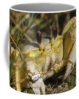 Atlantic Ghost Crab Close-up Coffee Mug