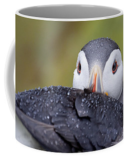 Atlantic Puffin With Rain Drops Coffee Mug