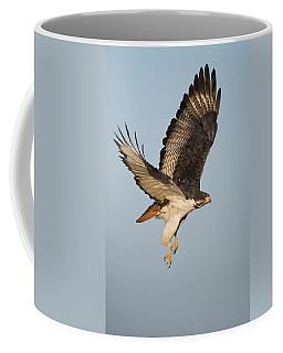 Augur Buzzard Buteo Augur Flying Coffee Mug