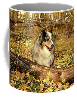 Austrailian Shepherd In Autumn Leaves Coffee Mug