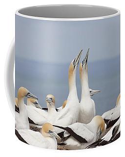 Australasian Gannets Courting Coffee Mug