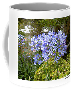 Australia Plant Life Coffee Mug by R Thomas Berner