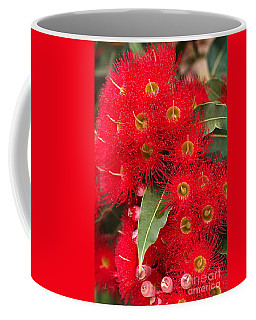 Australian Red Eucalyptus Flowers Coffee Mug