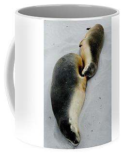 Australian Sea Lions Coffee Mug