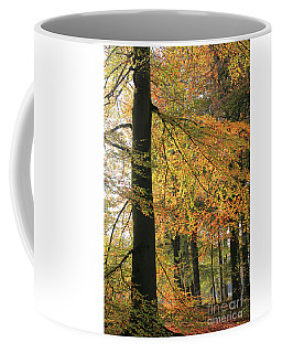 Autumn Colored Trees In Forest Coffee Mug