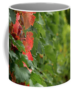 Autumn Comes To The Vineyard Coffee Mug