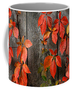 Coffee Mug featuring the photograph Autumn Creepers by William Selander