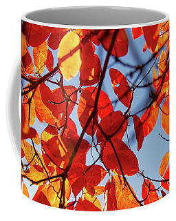 Autumn In The Arboretum Coffee Mug