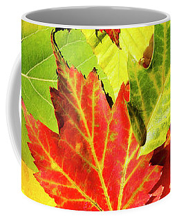 Coffee Mug featuring the photograph Autumn Leaves by Christina Rollo