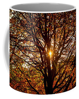 Autumn Light. Coffee Mug