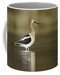 Avocet Looking Pretty Coffee Mug