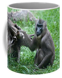 Coffee Mug featuring the photograph Baboon by Monte Stevens
