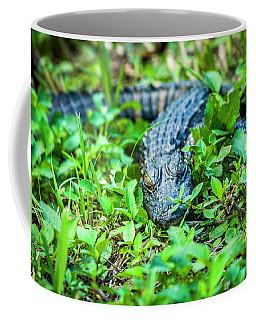 Baby Alligator Coffee Mug