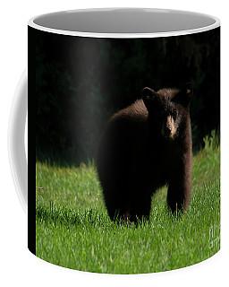 Baby Bear Stare Coffee Mug