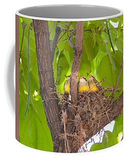 Baby Birds Waiting For Mom Coffee Mug