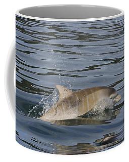 Baby Bottlenose Dolphin - Scotland  #35 Coffee Mug