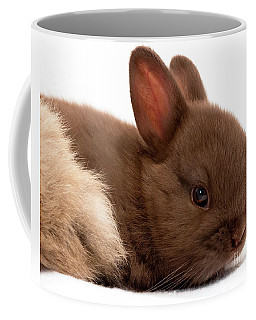 Baby Bunny  #03074 Coffee Mug
