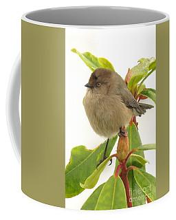 Baby Bushtit Coffee Mug