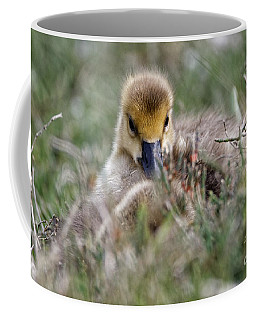 Baby Canada Goose Hidden In The Grasses Coffee Mug