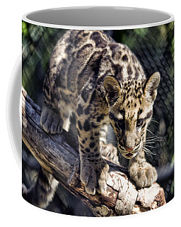 Baby Clouded Leopard Coffee Mug