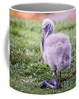 Baby Flamingo Sitting Coffee Mug by Stephanie Hayes