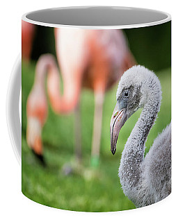 Baby Flamingo With Mom In Background Coffee Mug