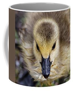 Baby Goose Portrait Coffee Mug