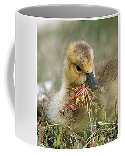 Baby Gosling Collecting Flowers Coffee Mug