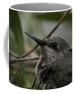 Baby Humming Bird Coffee Mug