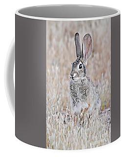 Baby Jack Rabbit Coffee Mug by Debbie Green