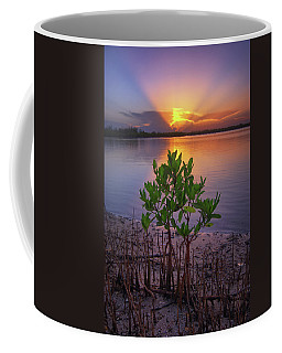 Coffee Mug featuring the photograph Baby Mangrove Sunset At Indian River State Park by Justin Kelefas