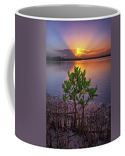 Baby Mangrove Sunset At Indian River State Park Coffee Mug