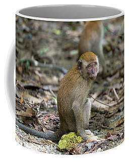Baby Monkey In Pulau Ubin Island Coffee Mug