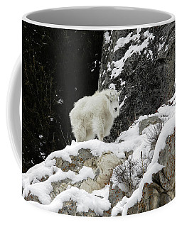 Coffee Mug featuring the photograph Baby Mountain Goat by Ronnie and Frances Howard