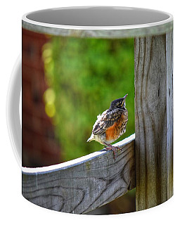 Baby Robin  Coffee Mug